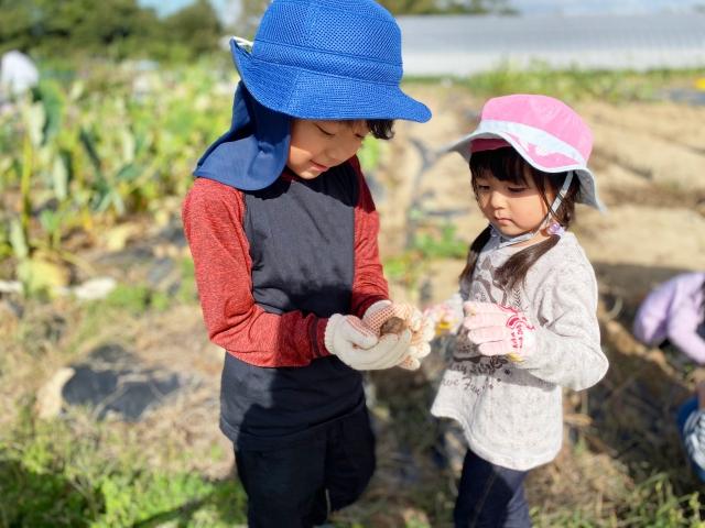 blog-harvest.jpg